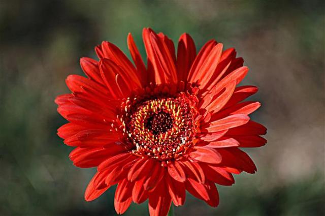 Flor para reflexionar 2