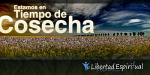 eSTAMOS EN TIEMPO DE COSECHA