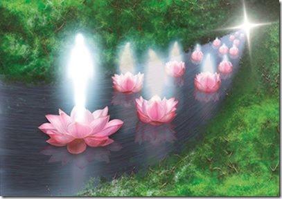 Flores de Loto iluminadas[1]