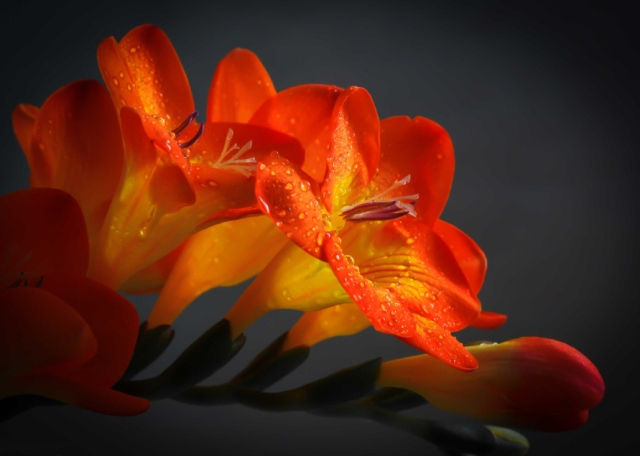 flores-hermosas-de-color-naranja