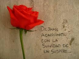 rosa con mensaje de amor