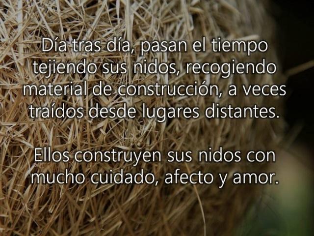 DIA TRAS DIA ELLOS  CONSTRUYENd