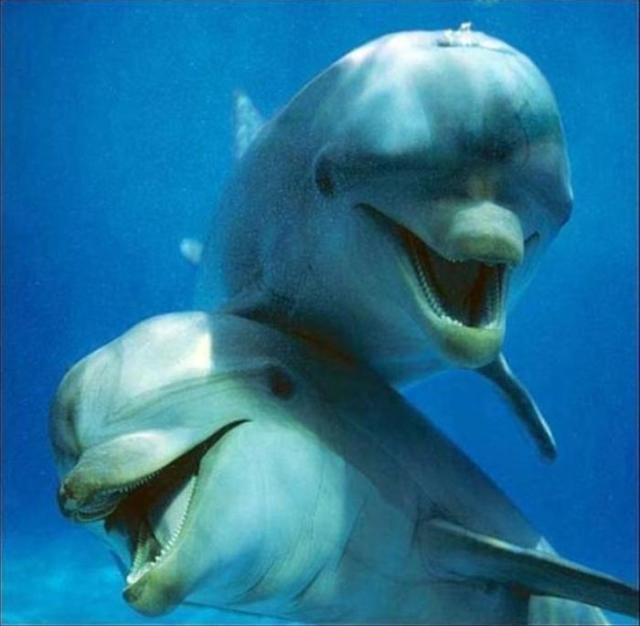 Amores de Delfines