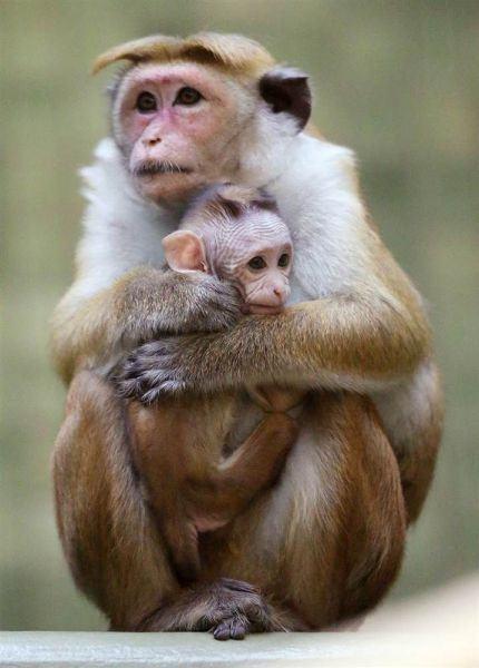 Madre con su hijjo
