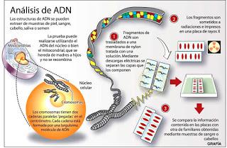 adn-analisis