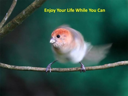 enjoy-your-life-if-you-can