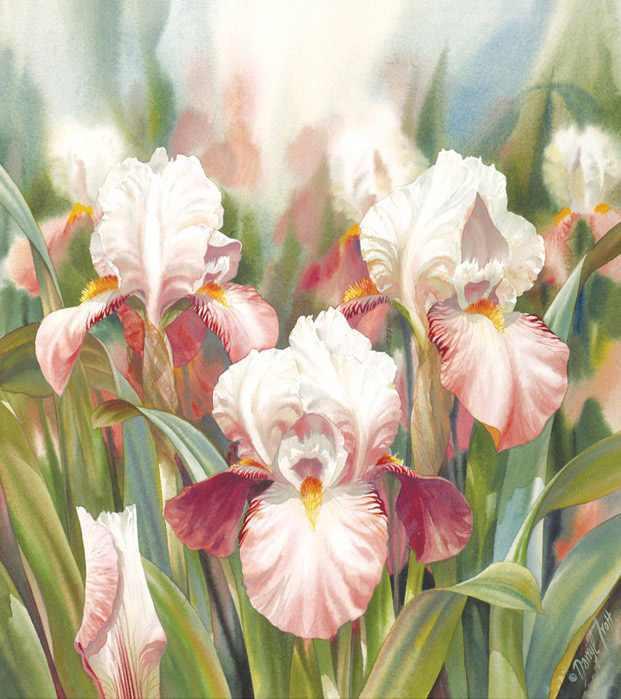 flor-lirios-de-verano