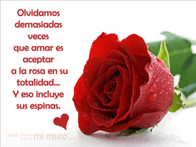 Amar la rosa con sus espinas.png