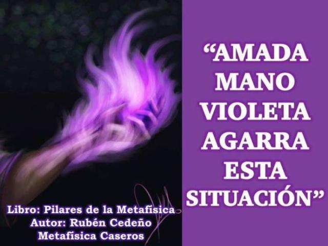 Amada llama violeta