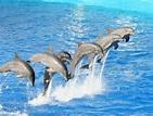 Imagens de delfines