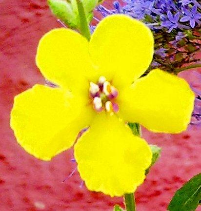 Flor amarilla para ti