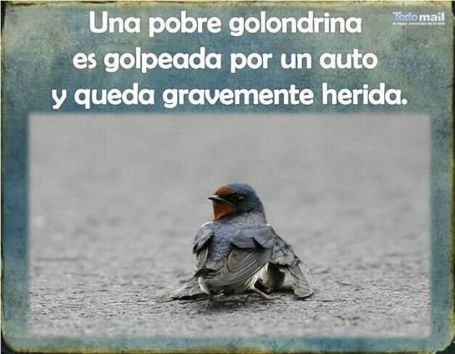 Golondrina 1