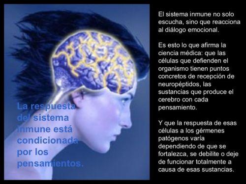 sistema-inmune-consciencia