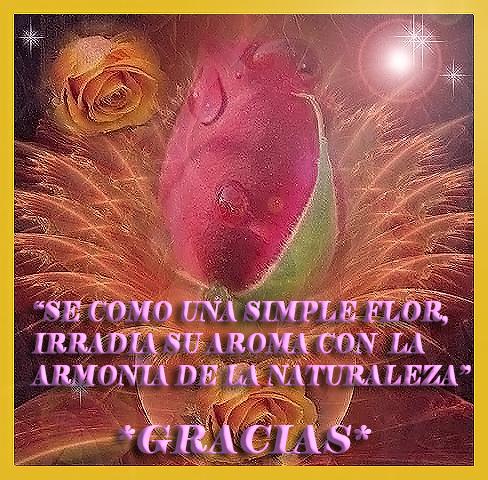 GRACIAS FLOR-3