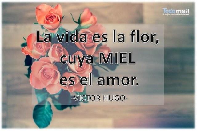 La vida es la flor